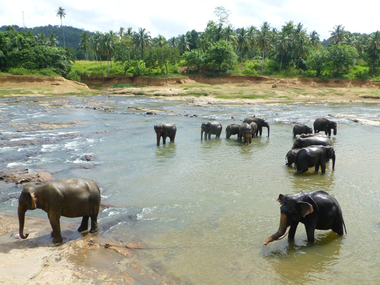 7 NIGHTS IN SRI LANKA: THE HIGHS AND LOWS