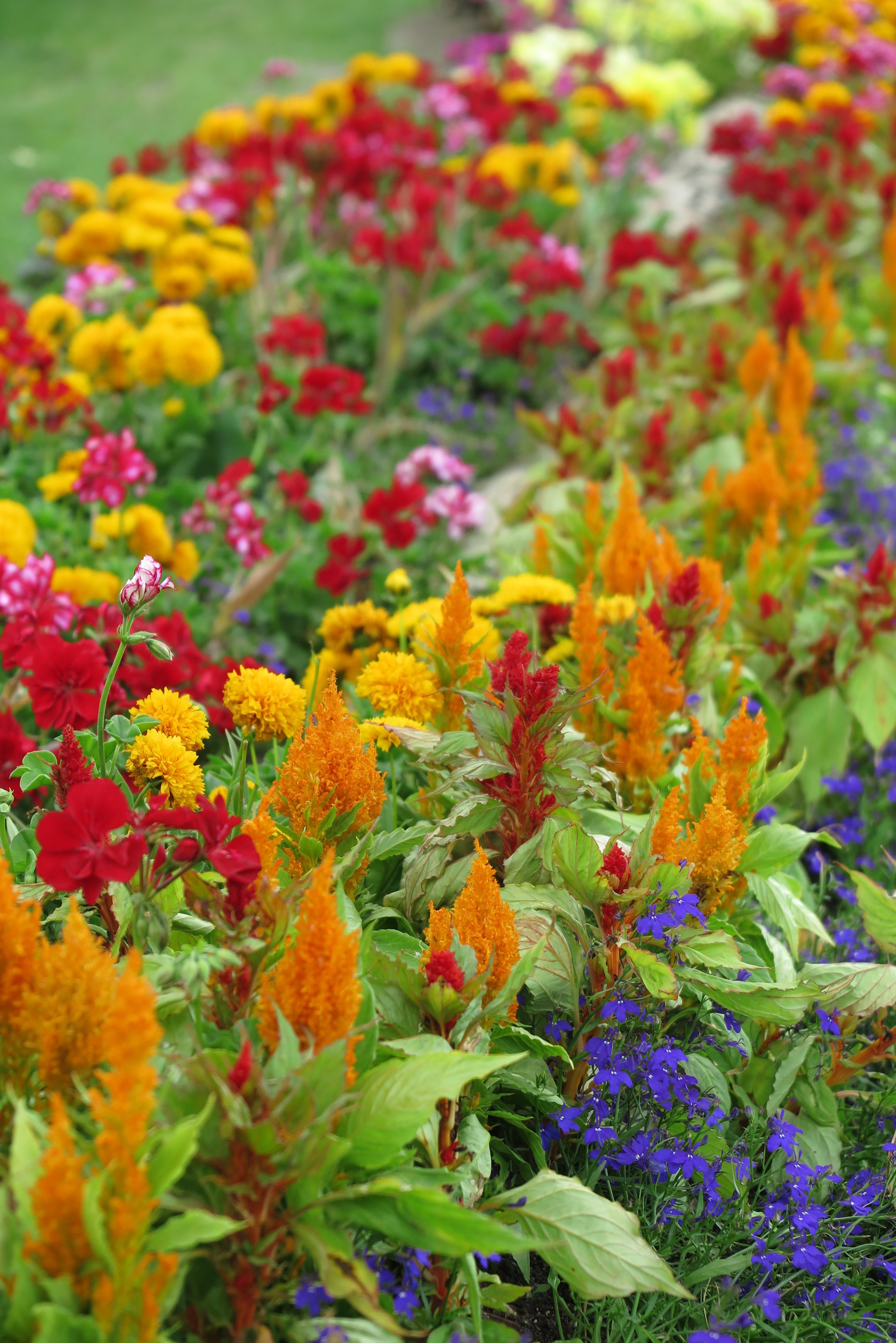 Princes Island Park Flowers