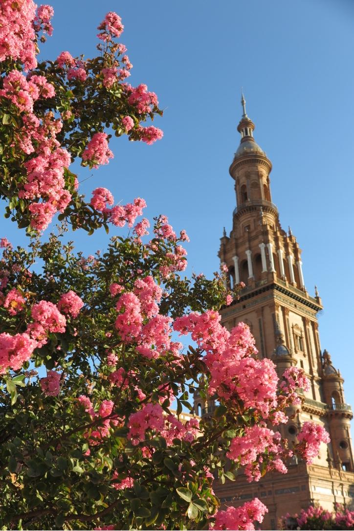 Flowers and Plasa de Espana